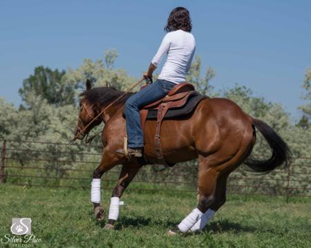 Anisha Horse Slick Silver Paw Studio