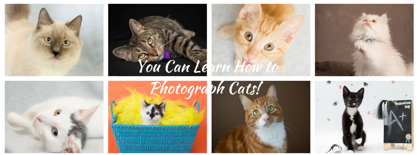 You Can Learn How to Photograph Cats! Cat Photography 101