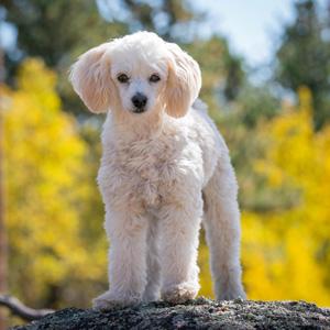 Ft. Collins pet photographer