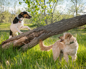 Photo of two dogs, taken by Ft. Collins Photographer
