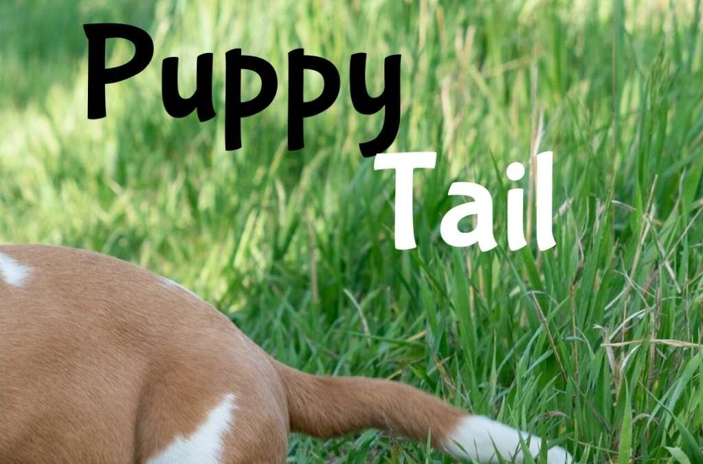puppy tail