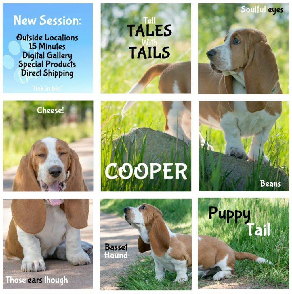 grid of photos of Cooper the Basset Hound