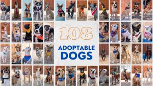 Photo grid of the 108 adoptable dog photos