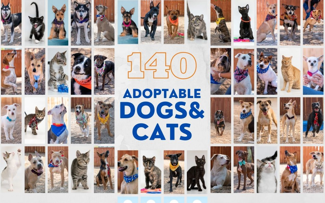 140 Adoptable Dogs and Cats Photographed in 2020