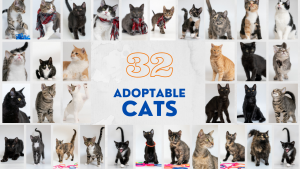 Photo grid of the 32 adoptable cat photos