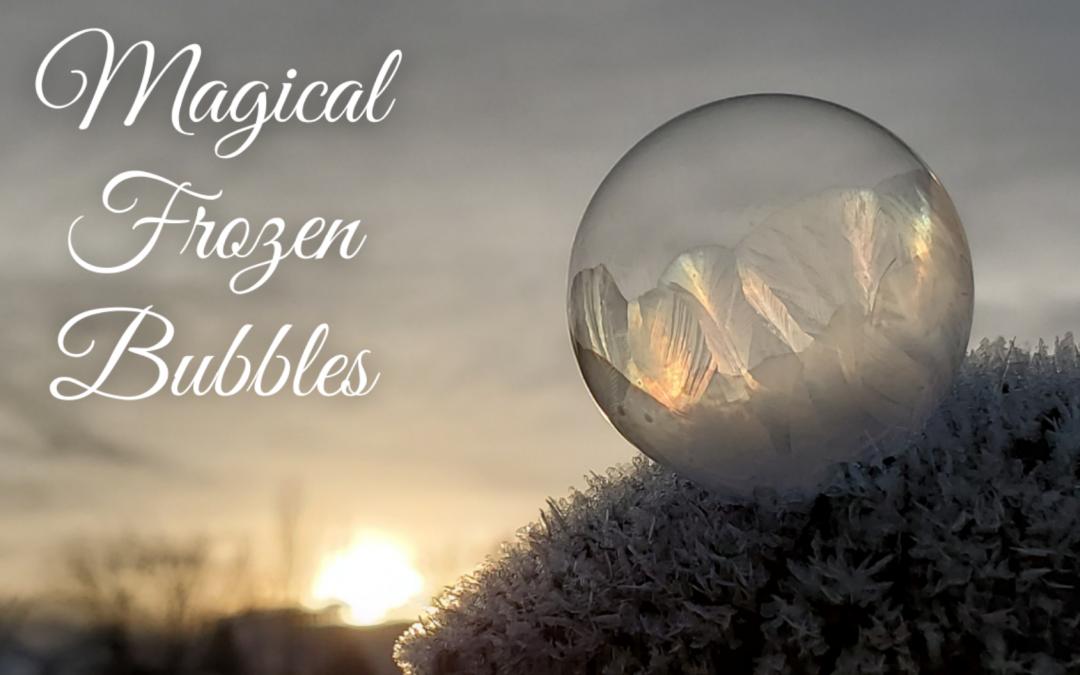Magical Frozen Bubbles with Your Pet