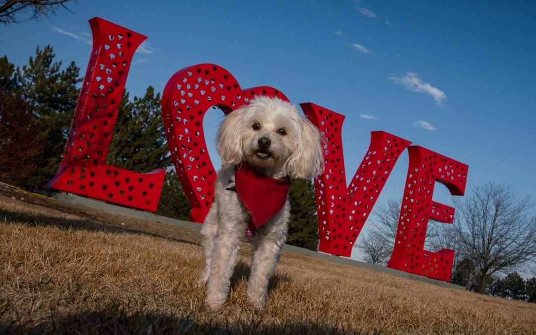 small dog standing at the LOVE sculpture in Loveland Colorado
