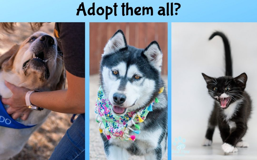 Don't you want to adopt them all?