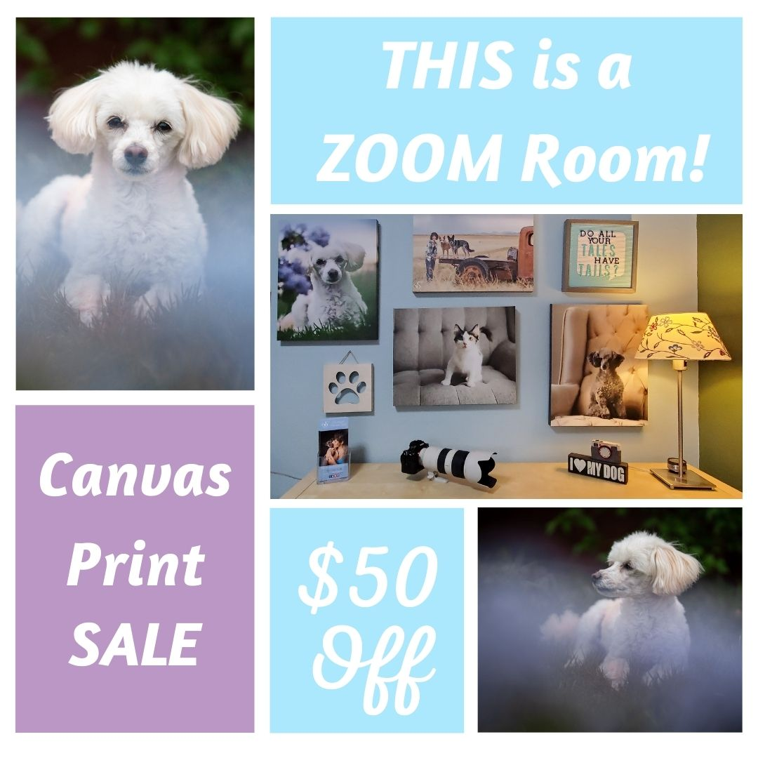 $50 coupon for 16x20 canvas wrap