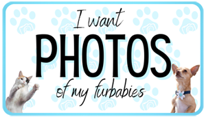 Ft Collins pet photographer