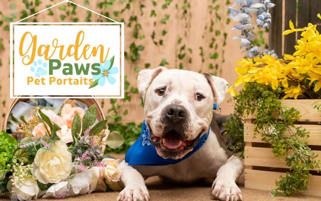 american staffordshire terrier laying in flower set