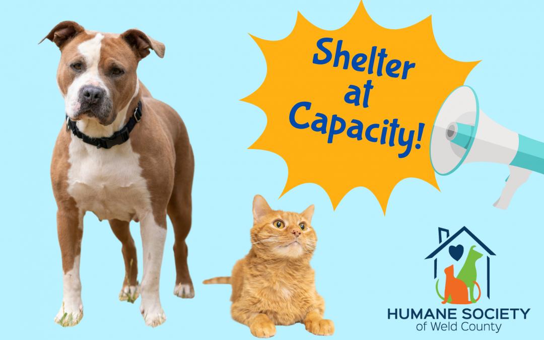 Shelter at Capacity