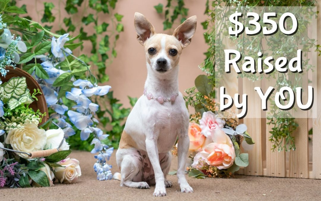 You Raised $350 for adoptable pets!