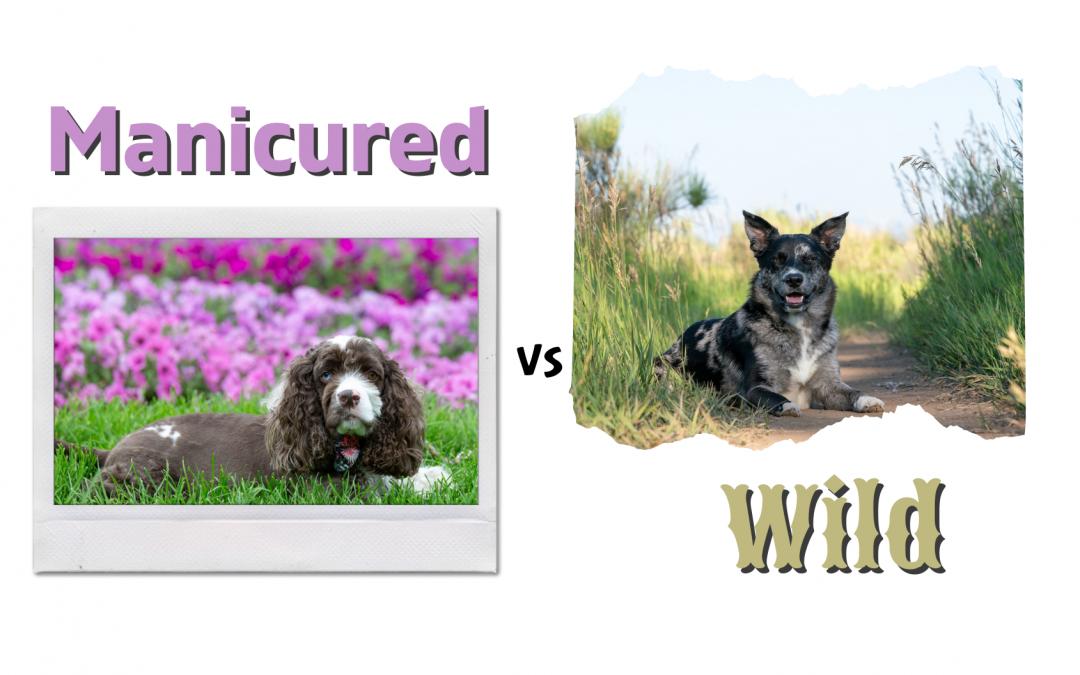Manicured or Wild?