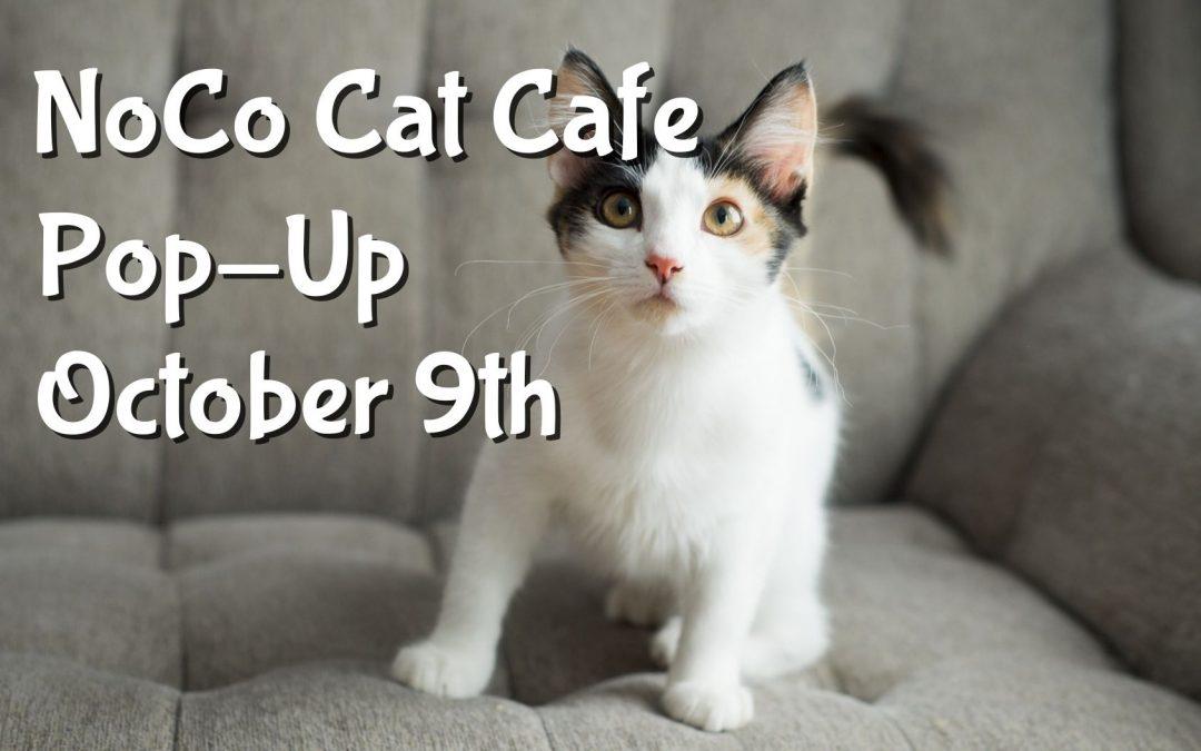 NoCo Cat Cafe Debut